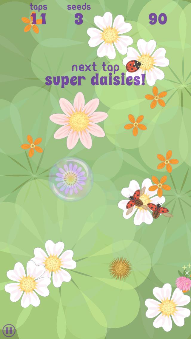 daisypop